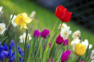 Colorful_spring_garden